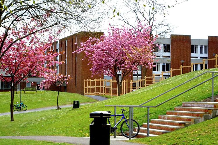 Студенты University of Sussex