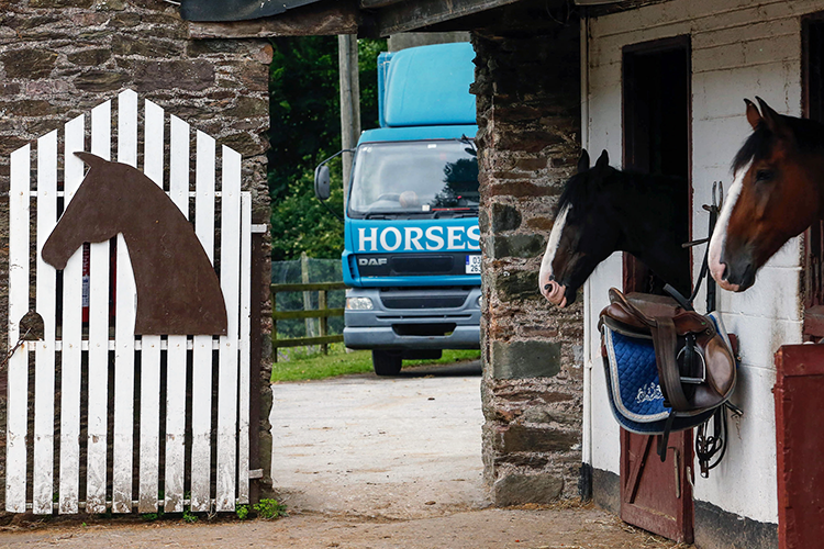 Ферма лошадей Cork English College