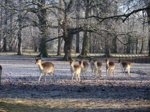 Олений парк возле Nyenrode Business University