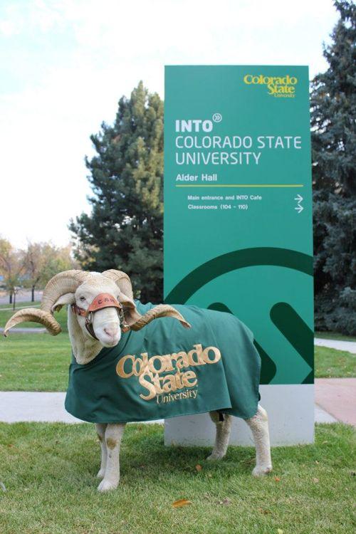 Талисман Colorado State University