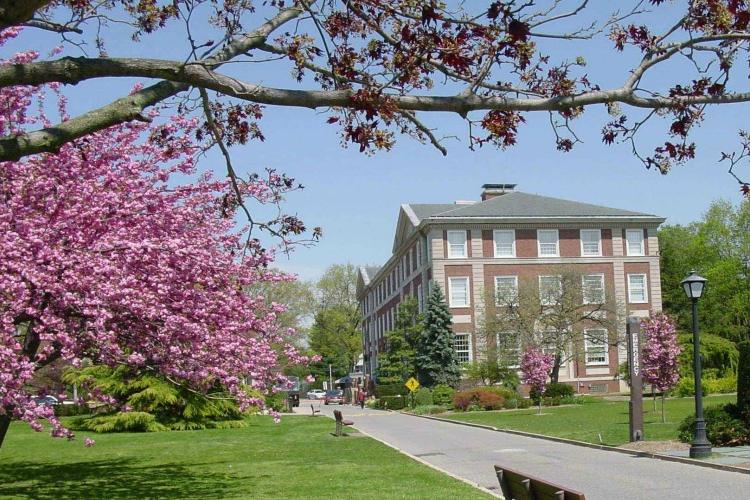 Кампус Adelphi University весной