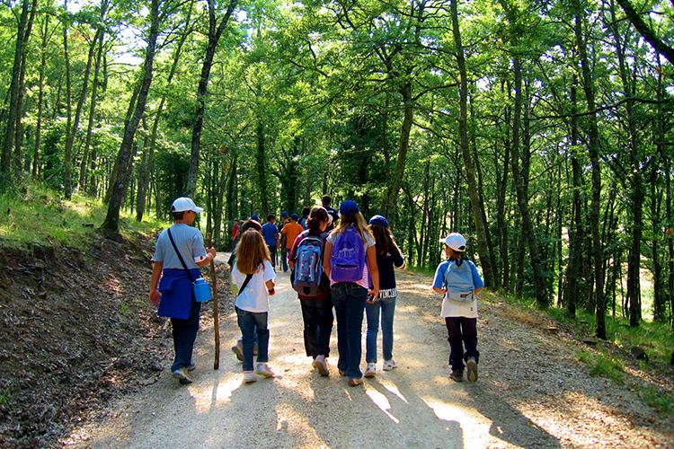 На ориентировании в лесу Alphabet International Camps, Todi