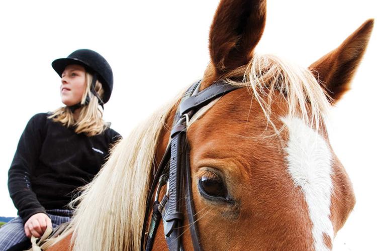 Занятия конным спортом в Alpadia, Frankfurt-Lahntal