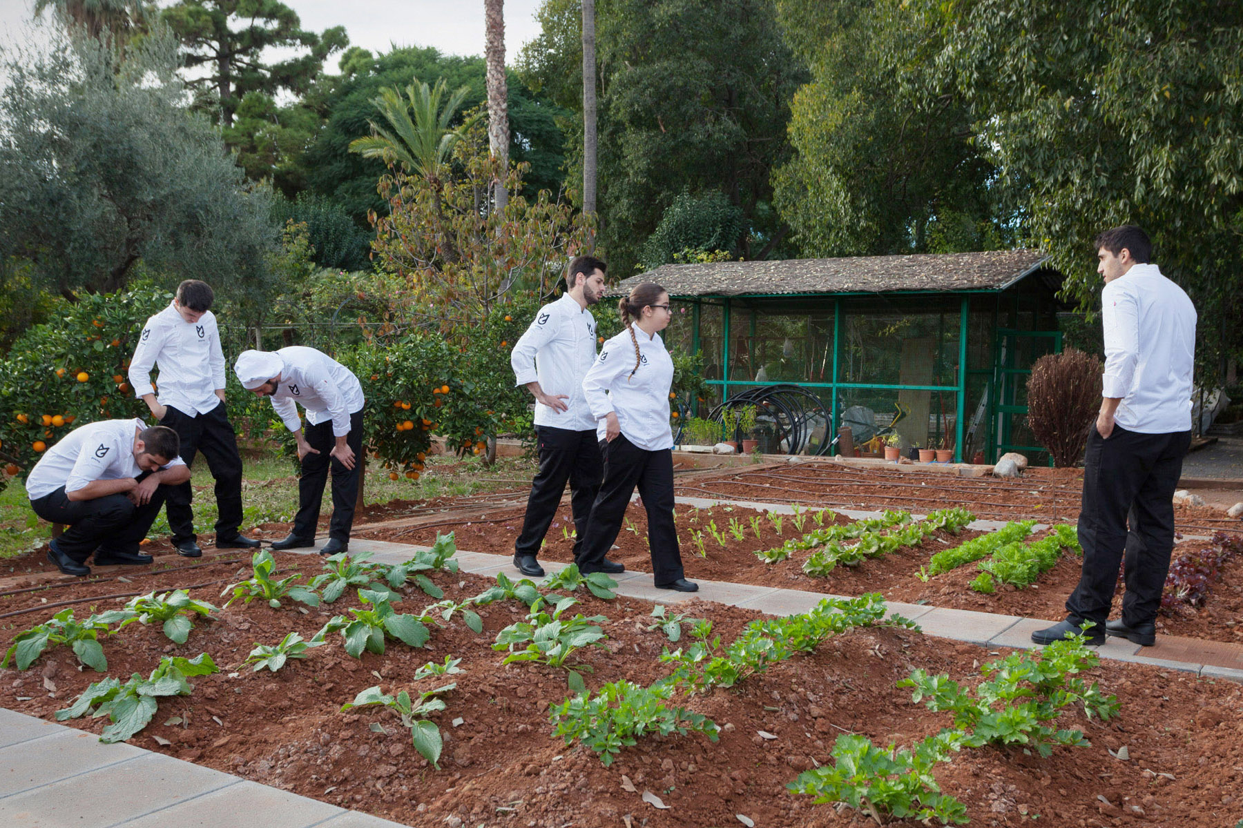 Кампус GASMA имеет свое подсобное хозяйство, где выращивают экологически чистые овощи